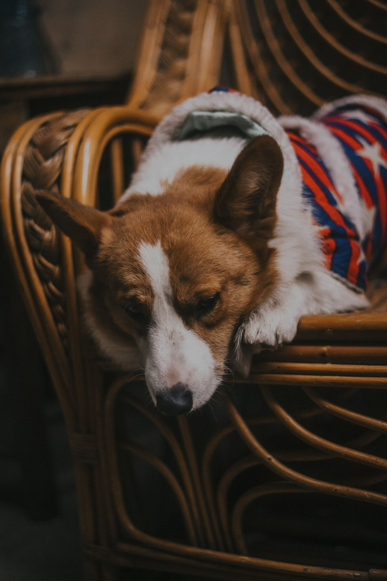dog lying on a chair
