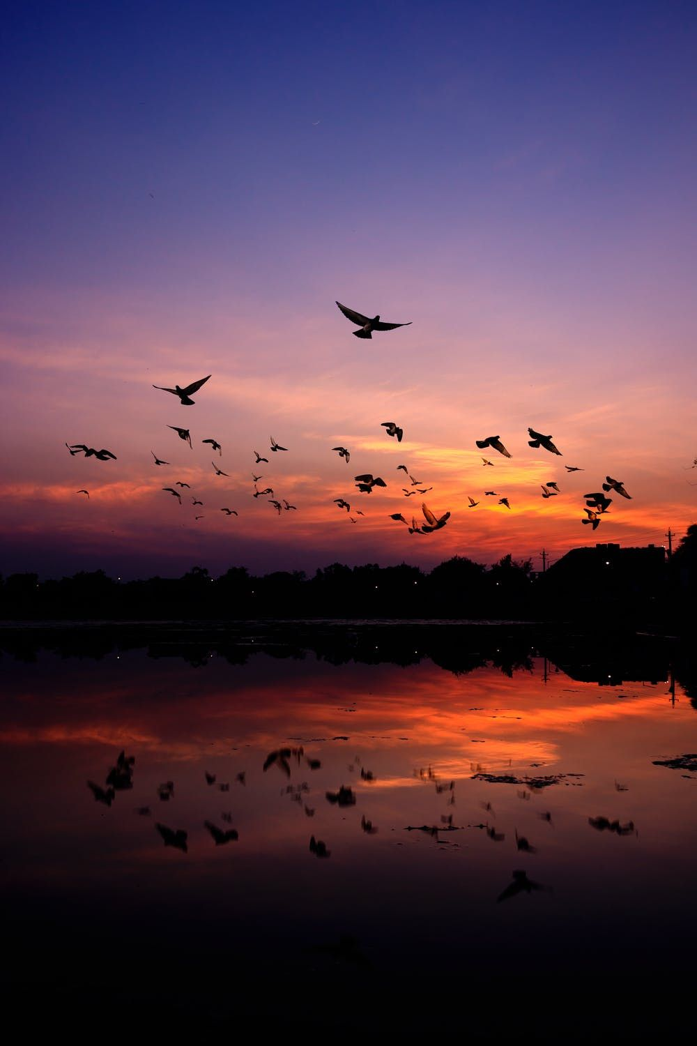 Birds flying into the sunset over the water