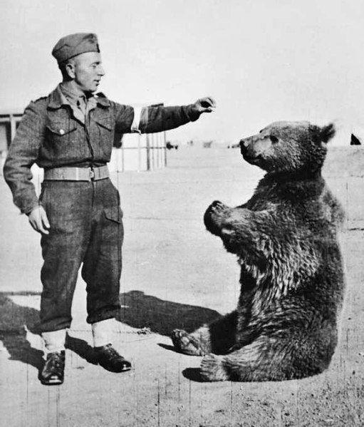 Soldier feeding Wojtek bear soldier