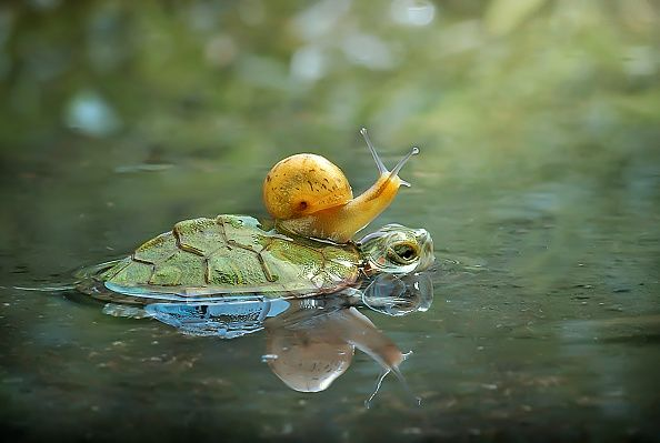 A snail sitting on top of a turtle