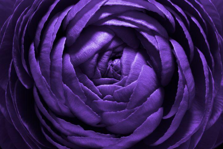 purple flower twirling inwards